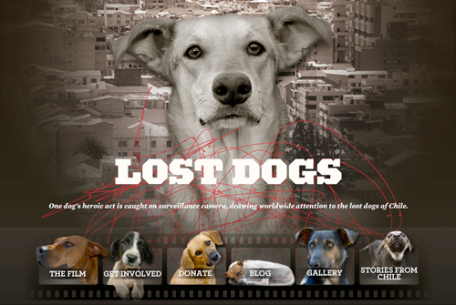 New Lost Dogs Film site
