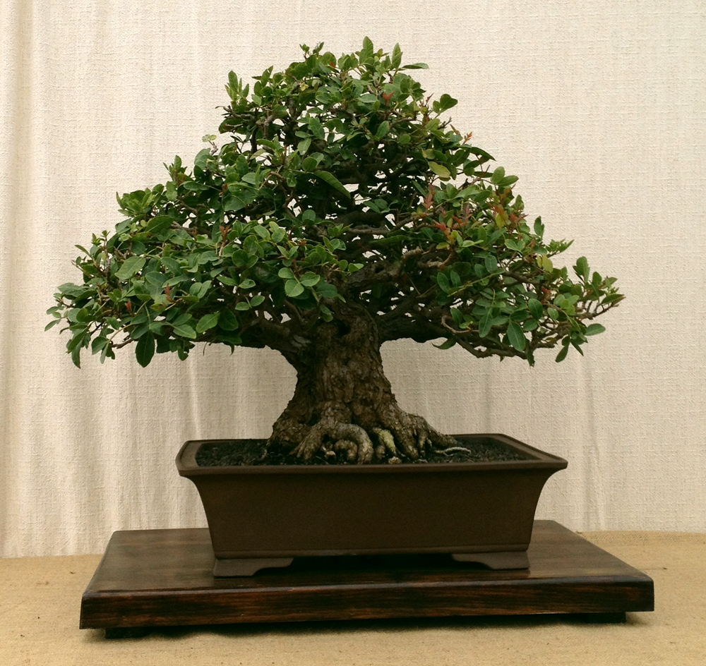 Bonsai Show at The Flower Fields in Carlsbad, CA